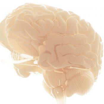 naturopathic neuro-immune