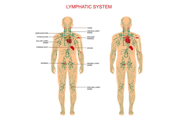 Dr. Krisko lymphatic system